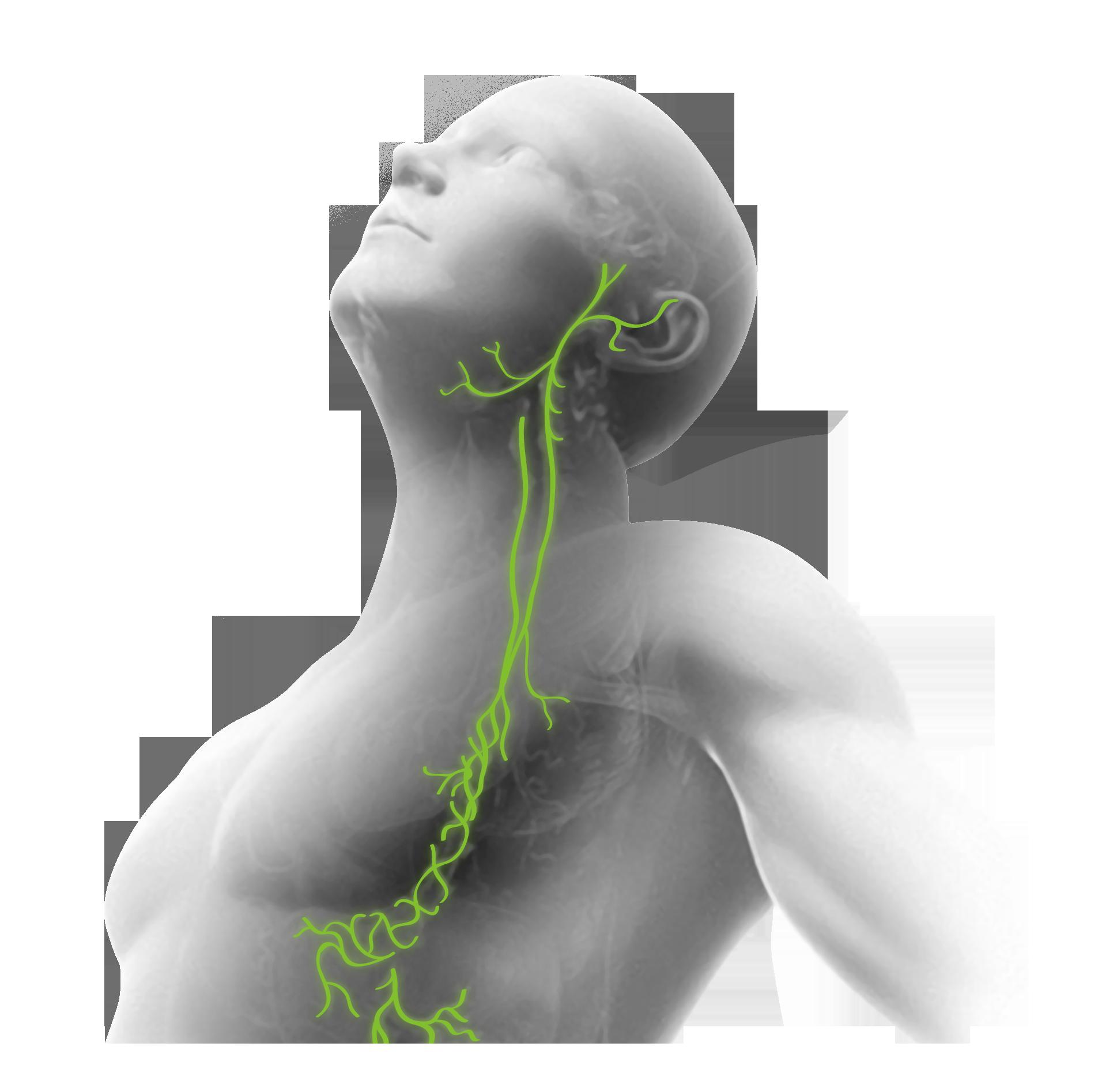 Чрескожная стимуляция блуждающего нерва
